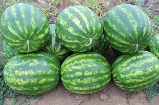 17450022 550x366 Чем полезны фрукты и ягоды сентября