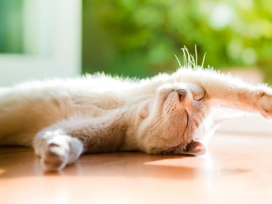 20142904133433 0 550x412 Кошки любят солнечные лучи