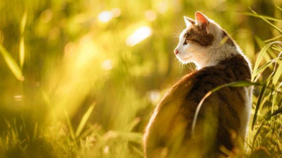 838c2822 550x309 Кошки любят солнечные лучи