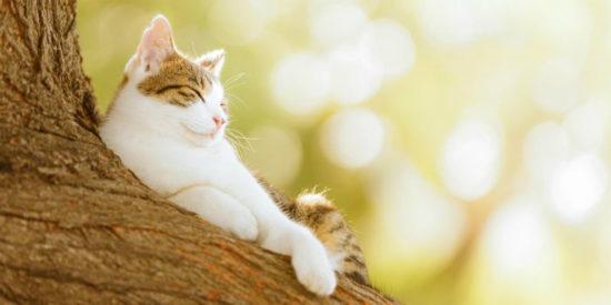 8ce00f62 550x275 Кошки любят солнечные лучи