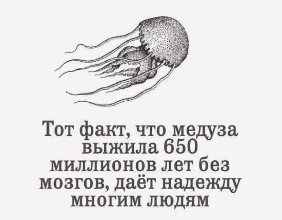 Tnyu Bm4SUY 550x428 Медуза дает надежду...