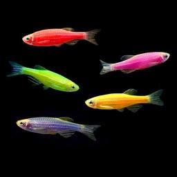 cgxuGX9Zv I Светящиеся рыбки