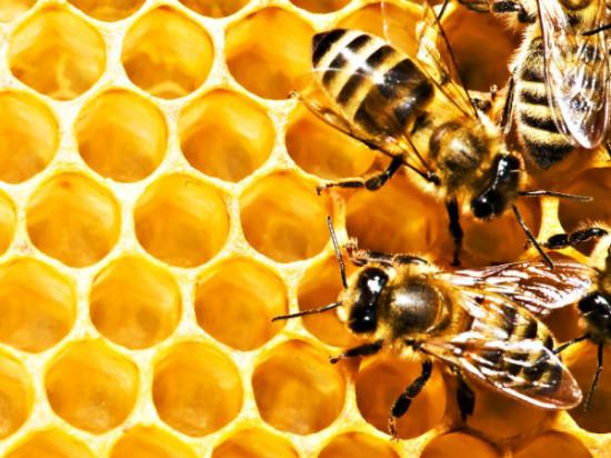med polza 550x412 10 чудесных продуктов пчеловодства