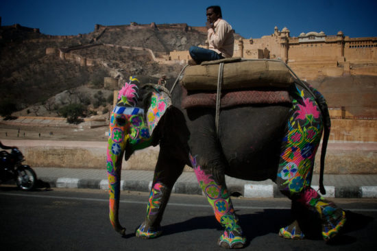 prazdnik slonov 7 550x366 50 фактов об Индии