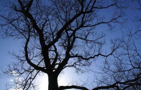 treesleonardo 2 550x352 Правило Леонардо