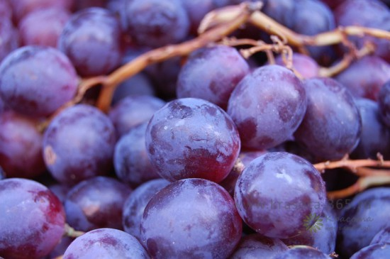 vinograd 77 550x365 Чем полезны фрукты и ягоды сентября