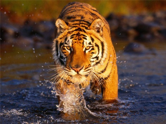 3d7ZINkC8 Q 550x412 8 видов животных на грани вымирания