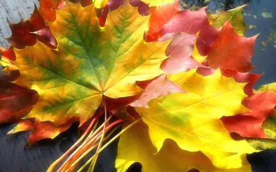 Nature Seasons Autumn Gifts of Autumn 018523  550x343 Очей очарованье