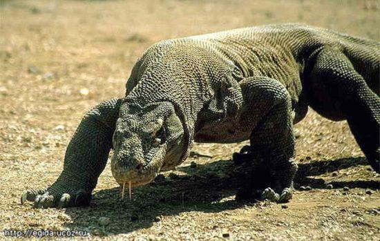 bd8df13dd2c2 550x349 8 видов животных на грани вымирания