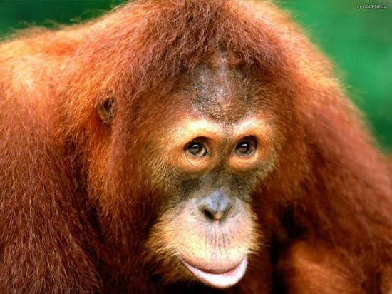 www.pcwalls.ru 1259 550x412 8 видов животных на грани вымирания