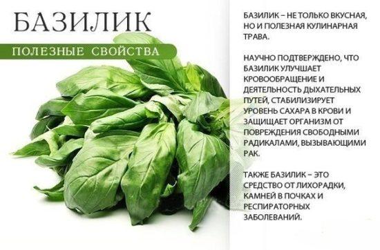 GP6kZYu777I 550x362 Полезные и лекарственные травы и овощи