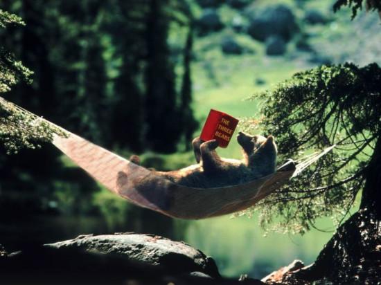 bear reading in wild 550x412 Ужасающая бездуховность