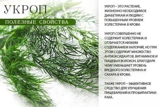 ike6pqYNMF0 550x362 Полезные и лекарственные травы и овощи