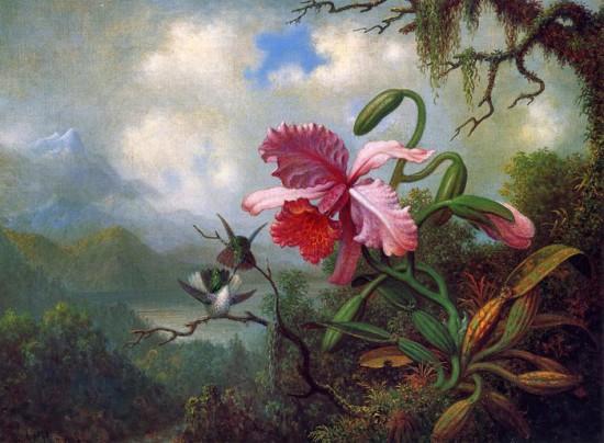 0002qy9a 550x404 Орхидеи, запечатленные художником