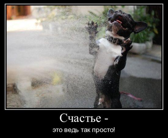 1304255749 schaste  550x452 Интересные факты о собаках и кошках