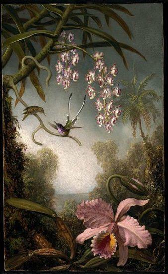 368px MJ Heade Orchids and Spray Orchids with Hummingbird 338x550 Орхидеи, запечатленные художником