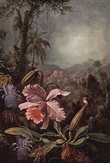 409px Martin Johnson Heade 001 374x550 Орхидеи, запечатленные художником