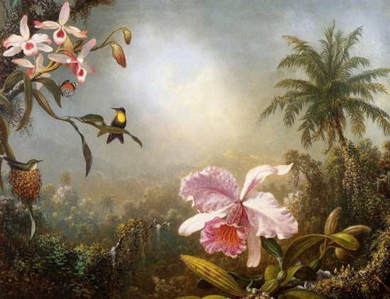 6871283 Orchids Nesting Hummingbirds and a Butterfly  Martin Johnson Heade  1871 550x422 Орхидеи, запечатленные художником