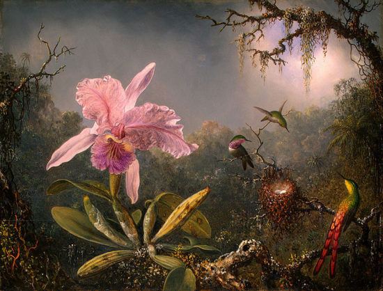 789px Martin Johnson Heade Cattleya Orchid and Three Brazilian Hummingbirds 550x418 Орхидеи, запечатленные художником