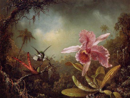 793px Orchid with Two Hummingbirds 1871 550x415 Орхидеи, запечатленные художником