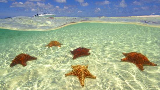 79d15e68 550x309 Большой Барьерный риф