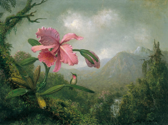 800px Martin Johnson Heade   Orchid and Hummingbird near a Mountain Waterfall 550x409 Орхидеи, запечатленные художником