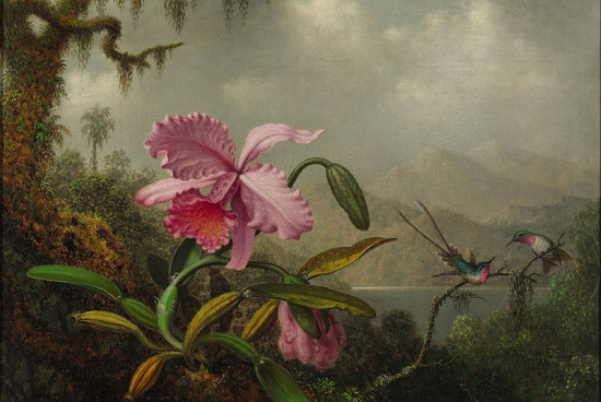 800px Martin Johnson Heade Orchids and Hummingbirds signed M.J. Heade l.l. Oil on canvas 1875 90 550x368 Орхидеи, запечатленные художником