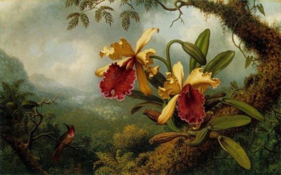 97147 orhidei i kolibri 1875 83 550x343 Орхидеи, запечатленные художником