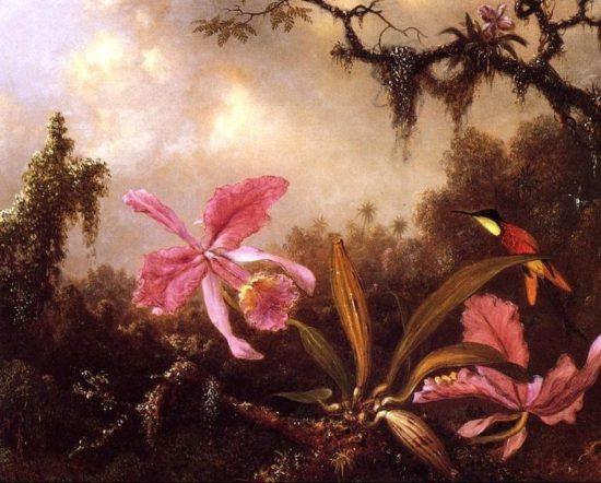Orchids And Crimson Topaz Hummingbird large1 550x442 Орхидеи, запечатленные художником