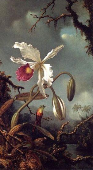 White Brazilian Orchid large 303x550 Орхидеи, запечатленные художником