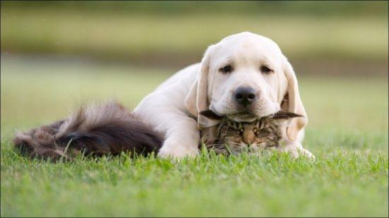 v3je0PYW7AA 550x309 Интересные факты о собаках и кошках