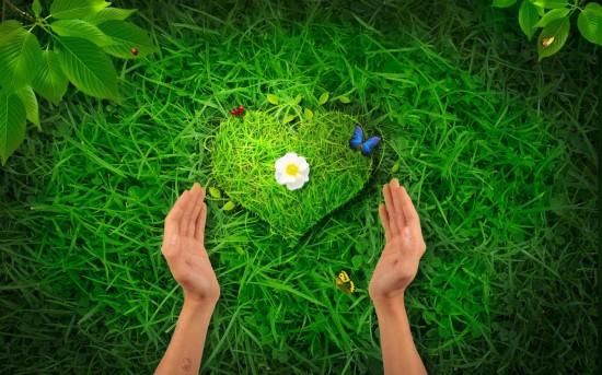 0013 007 Zadacha 5. Vospitanie tsennostnogo otnoshenija k prirode ekologicheskoe 550x343 Экологическое воспитание