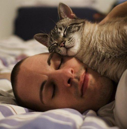 1360703256 8 Кошка терапия