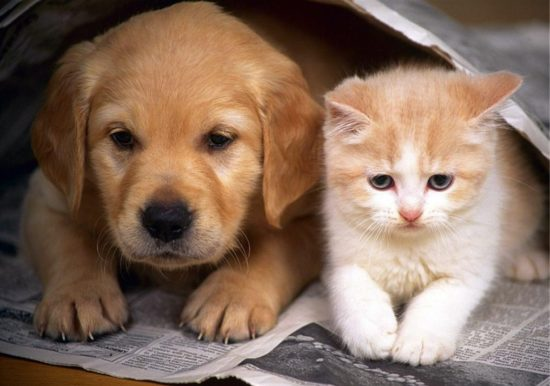 1406329228 puppies and kittens 550x386 XXI век   век аллергии