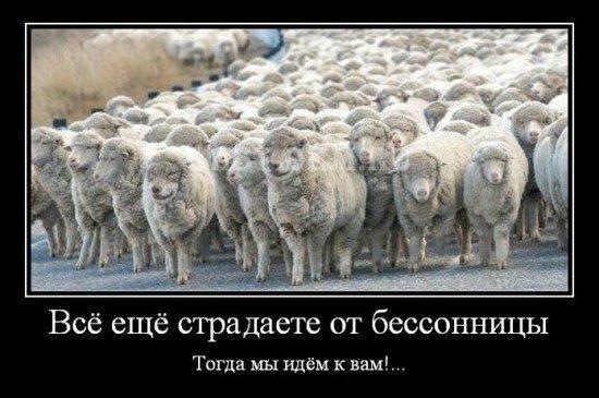 Vsyo eshhyo stradaete ot bessonnitsy Togda my idyom k vam... 550x383 550x365 Бессонница
