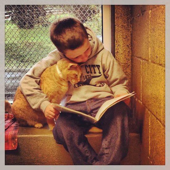bookbuddies14 550x550 Лечебная кошка или фелинотерапия