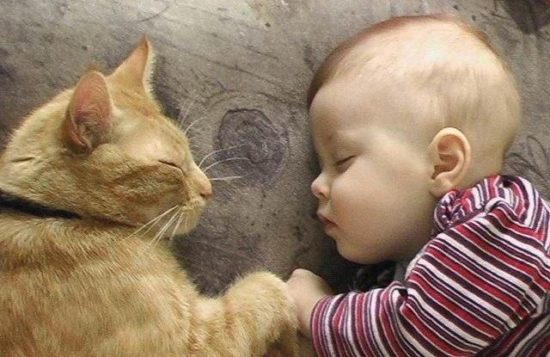 cat and baby sleeping 550x357 Лечебная кошка или фелинотерапия