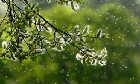 pollen XXI век   век аллергии