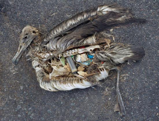 20120321182321 550x419 Пластиковый мусор