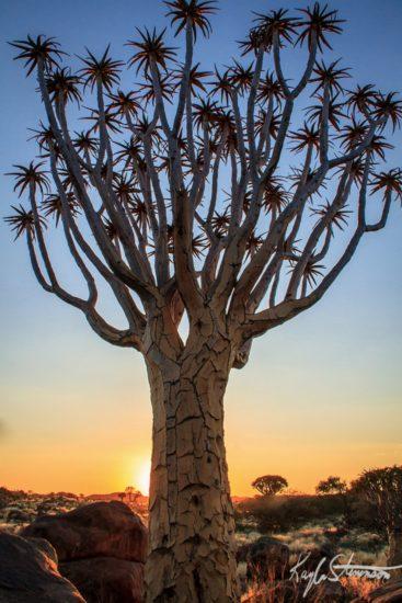 14401910 R3L8T8D 900 1 367x550 10 деревьев, которые словно с другой планеты