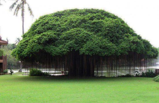 14402810 R3L8T8D 900 2 550x359 10 деревьев, которые словно с другой планеты
