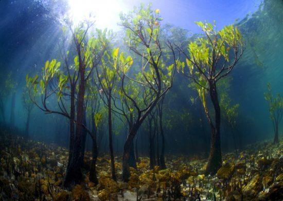 14406910 R3L8T8D 900 5 550x392 10 деревьев, которые словно с другой планеты