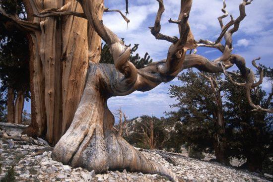 14407110 R3L8T8D 900 6 550x367 10 деревьев, которые словно с другой планеты