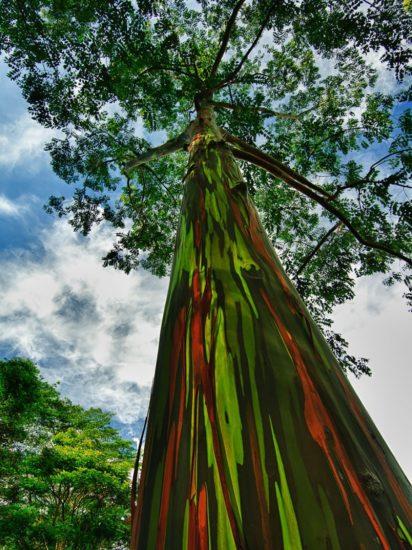 14408710 R3L8T8D 900 11 412x550 10 деревьев, которые словно с другой планеты