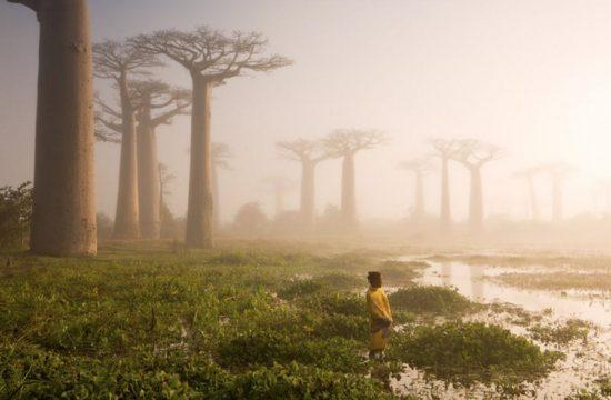 14410610 R3L8T8D 900 14 550x360 10 деревьев, которые словно с другой планеты