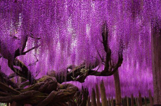 14420210 R3L8T8D 900 8 2 550x365 10 деревьев, которые словно с другой планеты