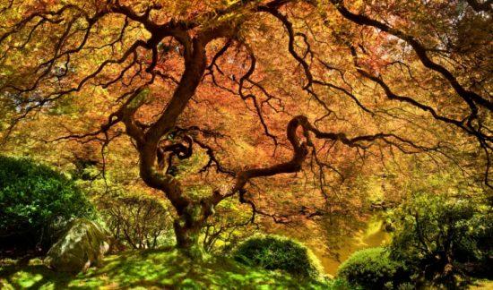 14435210 R3L8T8D 900 20 550x324 10 деревьев, которые словно с другой планеты