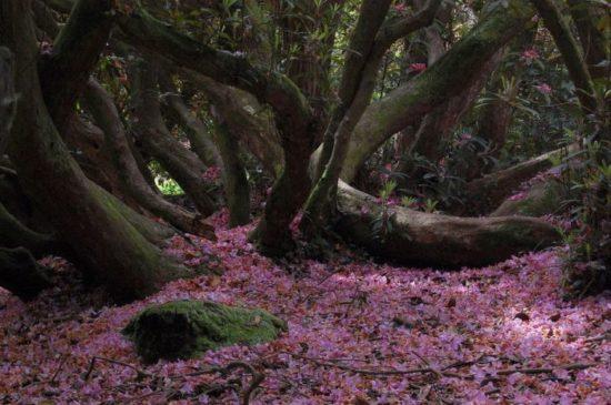 7 550x365 Затерянные сады Великобритании. История