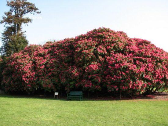 9 550x413 Затерянные сады Великобритании. Современность