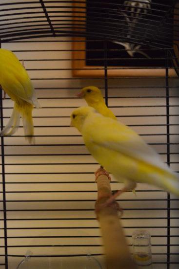 Vystavka ptits 1 367x550 Выставка певчих и экзотических птиц